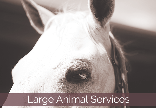 Young NSW Veterinary Clinic Large Animal Services